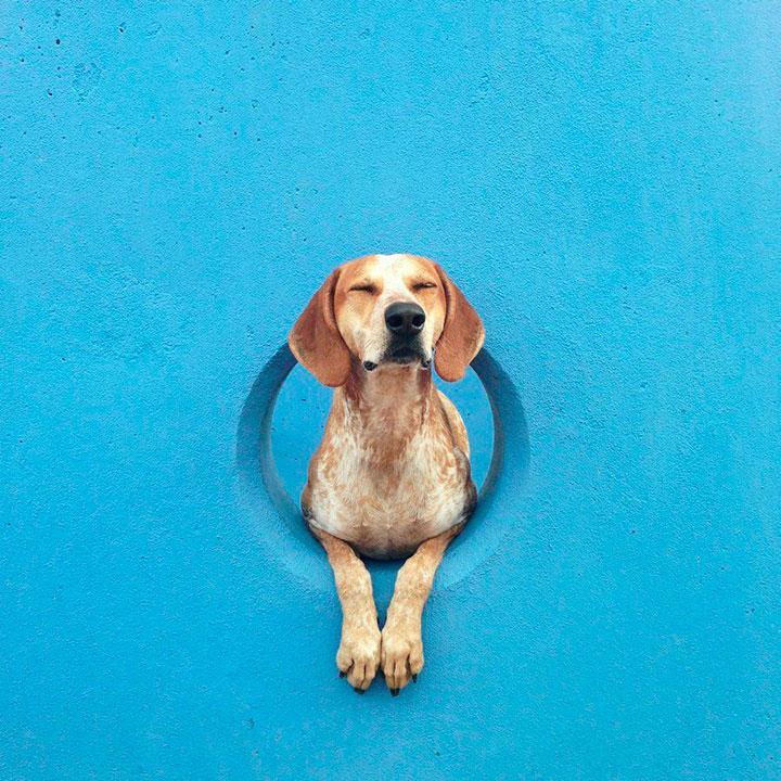 Мэдди - собака