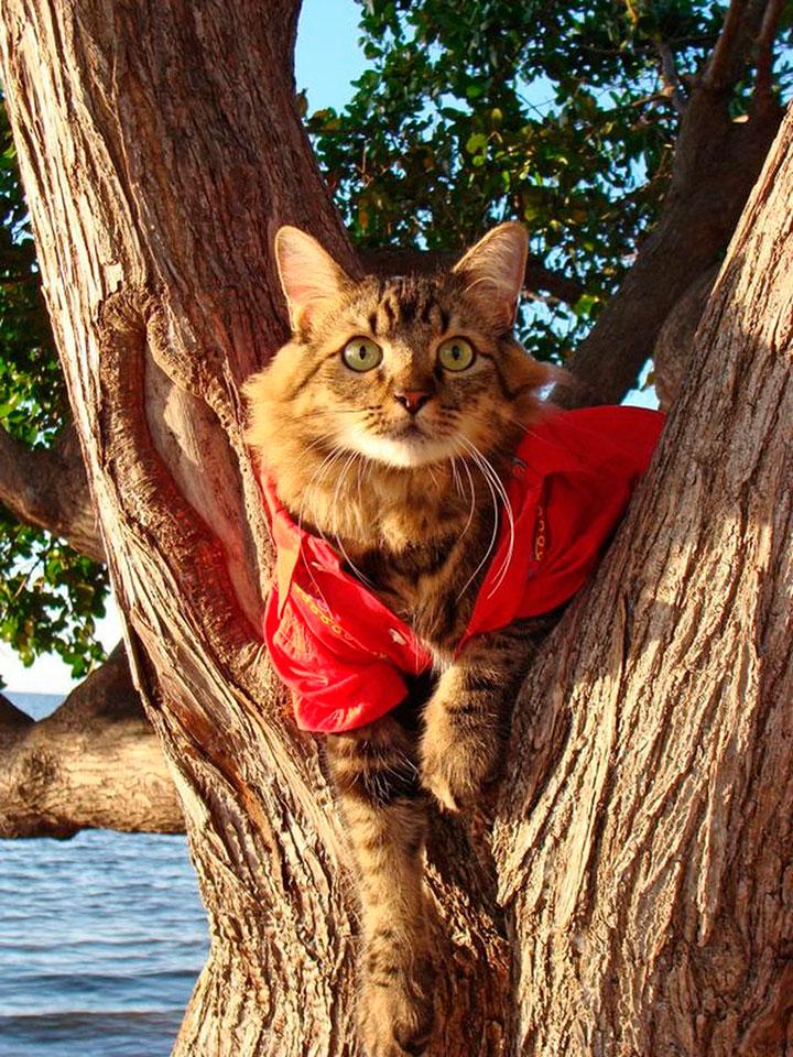 Кот - модель